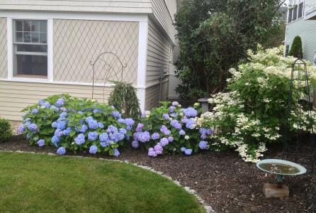garden, house, home Improvement