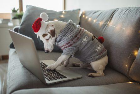 holiday, christmas, internet, shopping, finance