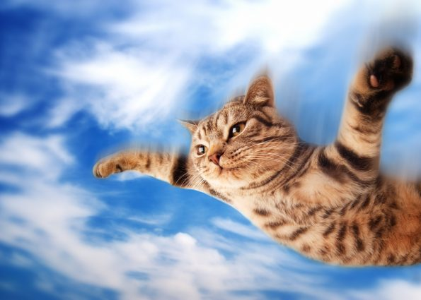 cat, cats, flying