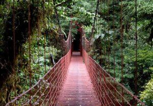 Hanging-Bridge-at-the-Monteverde-Cloud-Forest-Reserve