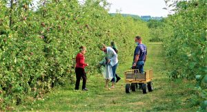 Apple picking during the Empire State Road Trip